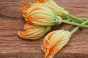 Beautiful Zucchini Blossoms